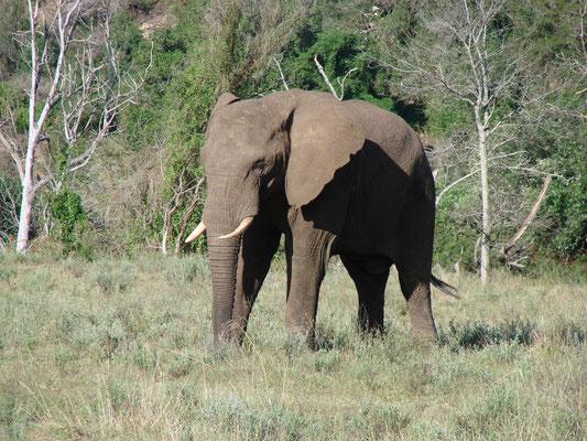 Auf Erkundungstour haben wir Elefanten, Zebras etc. gesehen, sowie...