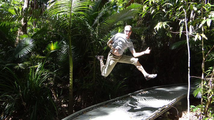 Im Daintree National Park bei Port Douglas, Australien 2013