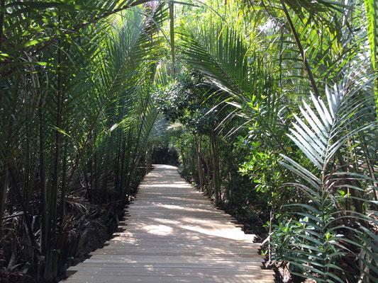 "Auf Pulau Ubin im National Park ""Chek Jawa Wetlands"""