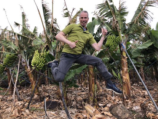 Bananenfeld, Insel La Palma, Kanarische Inseln, März 2019