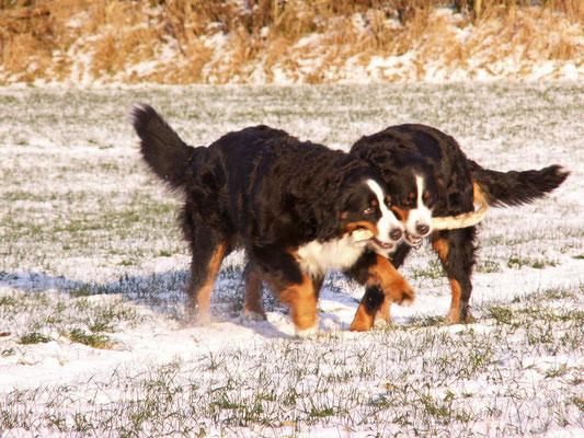 Berieke und Deele vom Rönnbaum, Winter 2012