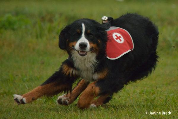 Gonja vom Rönnaum, April 2015 - Prüfung zum Rettungshund