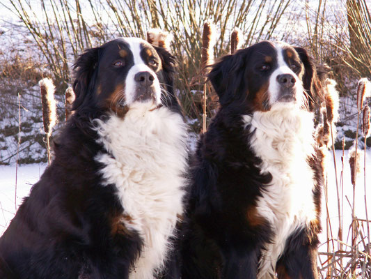 Deele und Berieke vom Rönnbaum, Winter 2012