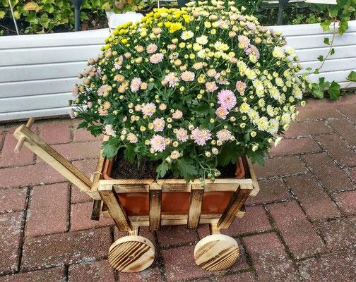Kleiner Dekobollerwagen mit Blumenkübeleinsatz - Kundenbild aus Lüneburg