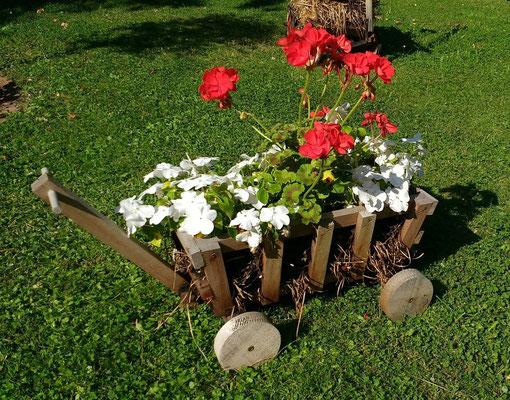 Ohne Blumenkübel nur mit Stroh - Kundenbild aus Kassel
