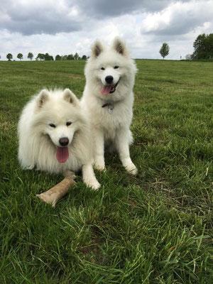 Akiba und sein Freund Snow
