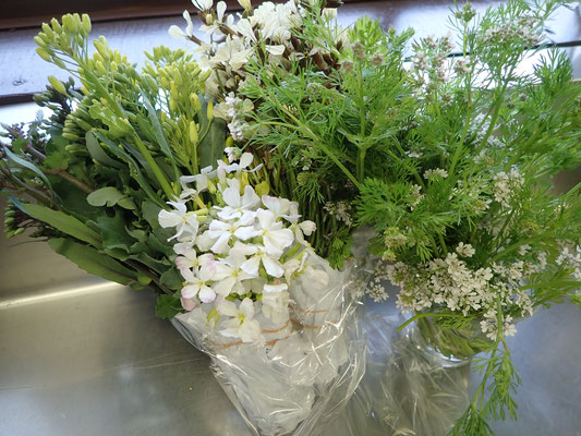 右はコリアンダーの花。手前の白はダイコンの花。奥の黄色はケールやコラード。