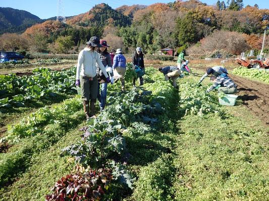 こちらは日曜日のショートコース。晴天の中の収穫三昧。
