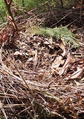 昨年つくった鳥の巣。の中に本物の鳥の巣もありました。一つ手掛けた事象が次の事象につながっていく面白さ。