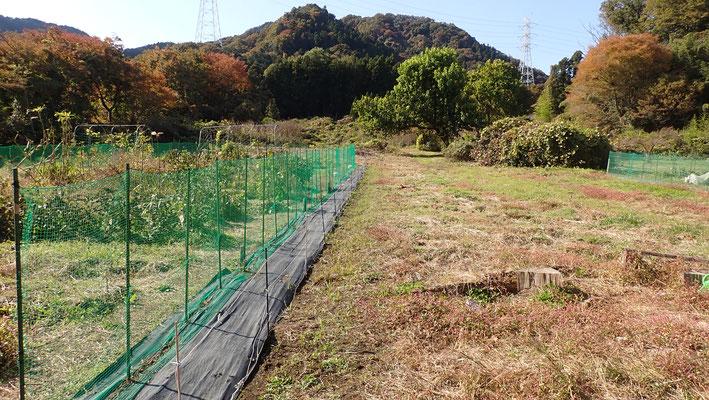 外周はイノシシよけのネットで囲ってあります。イノシシが好んで掘り返すギシギシなどの雑草退治はとても大事です