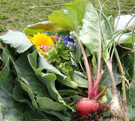 今日の収穫。手前はビーツ。