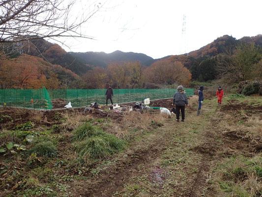 卒業生の自主畑も冬支度。動物除けのネットを張り直しです。