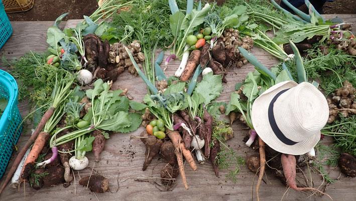 収穫はたっぷり。白菜やキャベツの大物も出てくるので持ち帰りは結構大変です。