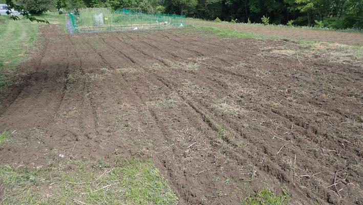大豆用に開梱・整地した畑。数年ぶりの植え付けです。その前に鳥獣害対策のネットを張ります。