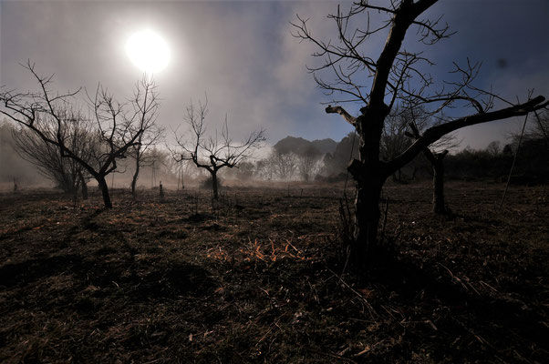 枯野の朝に立ち上る霧は神秘的