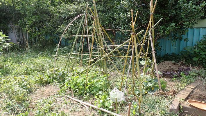 キュウリや三尺ササゲなど、これから重たくなる面々のために支柱を補強。資材はすべて奥の竹。
