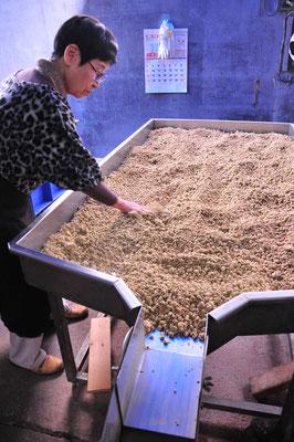 麹づけのできたもろみを放冷させて落ち着かせます。これを引き取って塩水につけて一年がかりで醗酵させます。