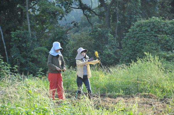 農学校の卒業生の自主活動。すっかり手慣れたものです。
