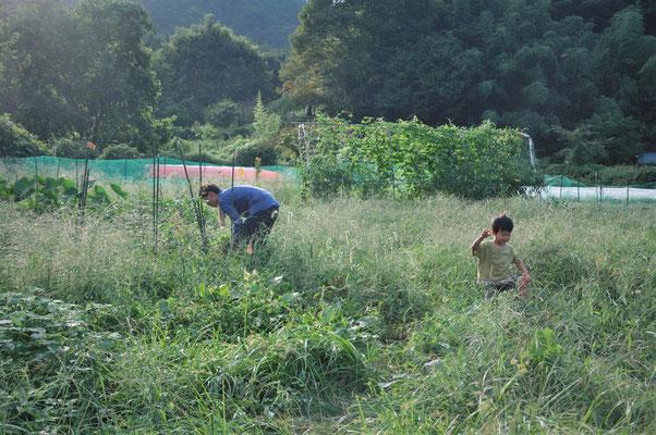 さとやま農学校卒業生の地涌畑。親子でのんびり