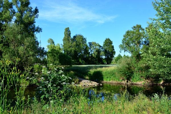 Natur pur am Wißmarer See