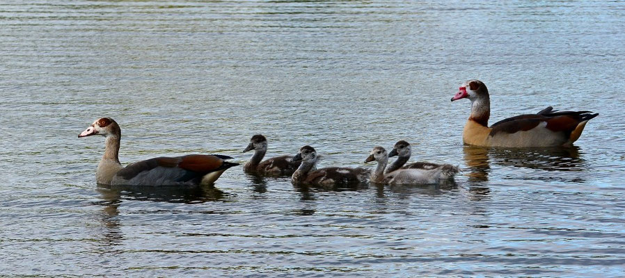 Eine ruhige Runde drehen am Wißmarer See