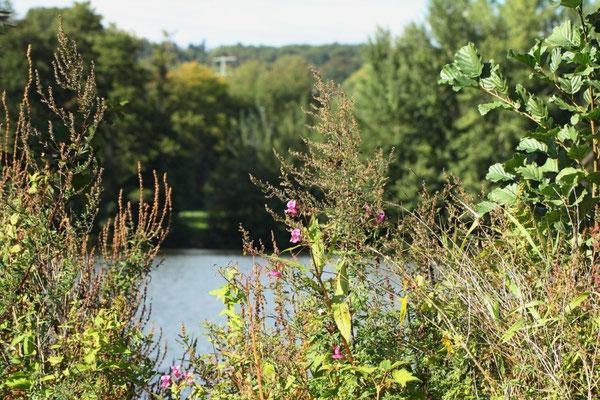 Herbstblumen am Wißmarer See
