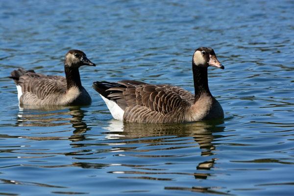 Die ersten Badegäste am Wißmarer See