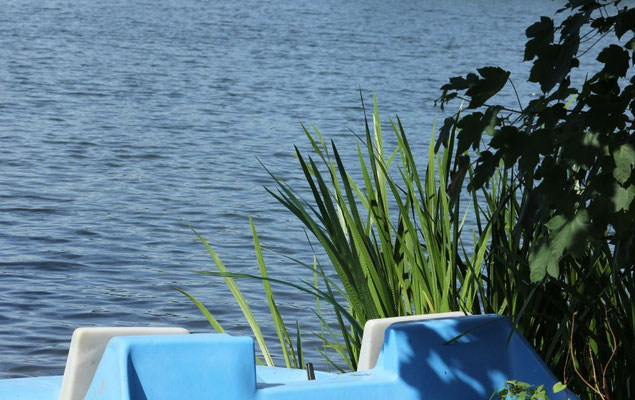 Und nebenbei Natur genießen am Wißmarer See