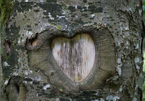 die Rinde eines Baumes am Wegrand... für wen sein Herz wohl schlägt?