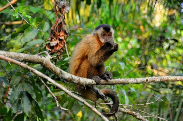Affen besuchen uns jeden Morgen