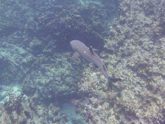 Wir sehen den ersten Hai