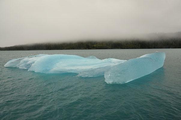 Der erste Eisberg! Wow!
