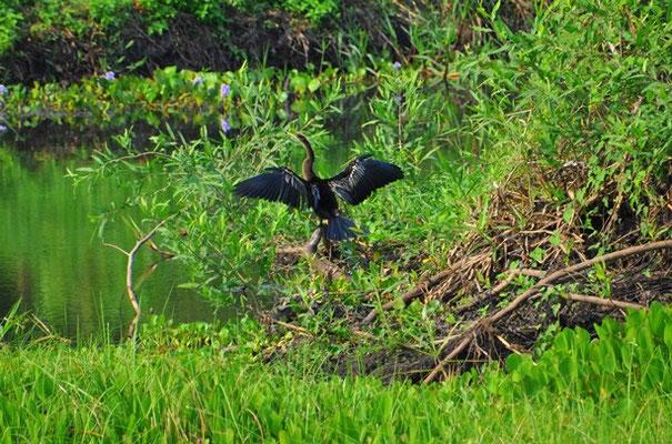 Ein Fischreiher trocknet sich die Flügel