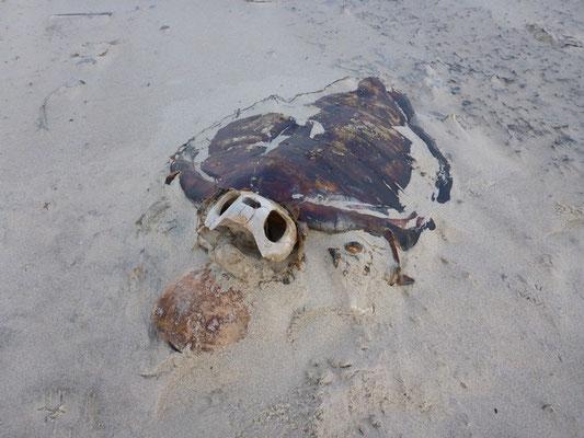 Tote Meeresschildkröte