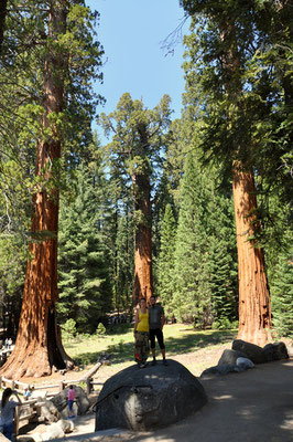 Der General Sherman Tree (Stammdurchmesser 11 Meter)