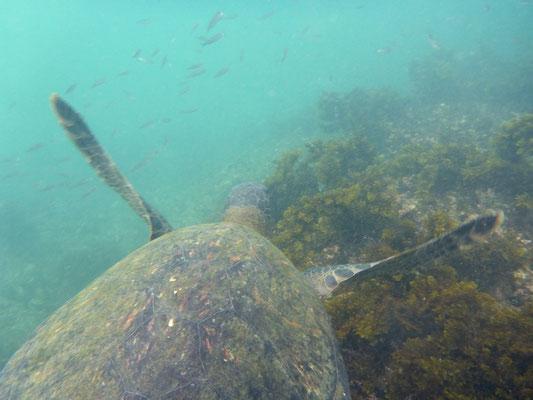 Wie fliegen aber unter Wasser