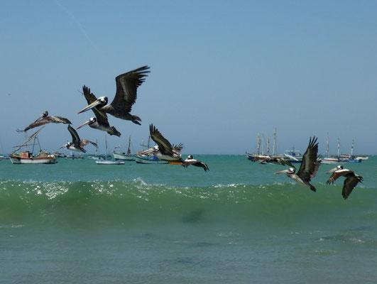 Pelikane im Abflug
