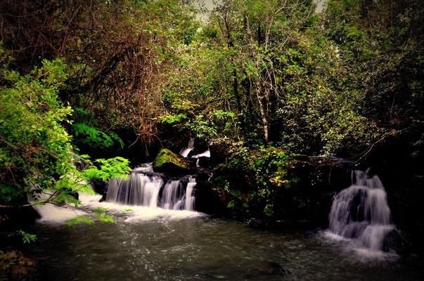 Auch kleine, liebliche Wasserfälle gibt es zu bestaunen