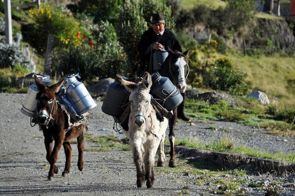 Die Milch wird mit Eseln angeliefert