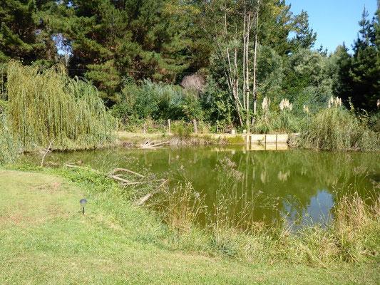 Der grosse Teich