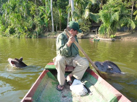 Die Tapire wollen auch zum Fischen mit