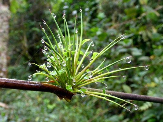 Wunderschön im kalten Regenwald