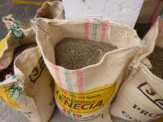 Die grünen Kaffeebohnen für den Export