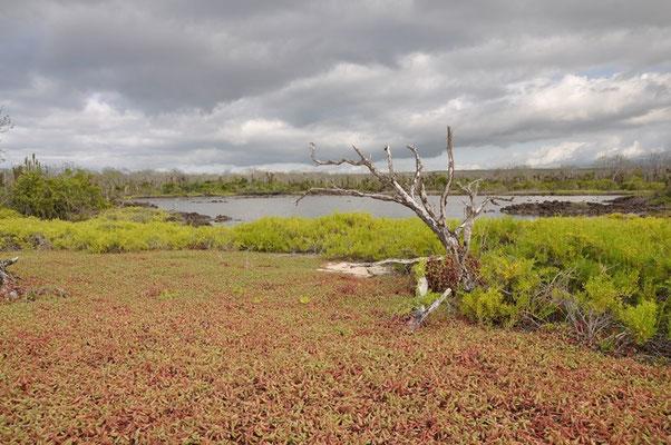 Wundervolles Grün auf der sonst trockenen Insel