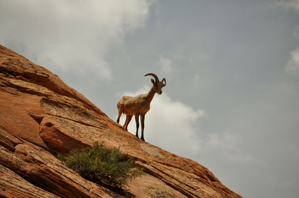 Wunderschön diese Kletterer zu beobachten