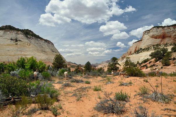 Was für ein schöner Ausblick in Richtung Zion NP