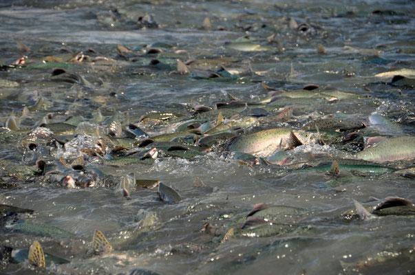 Tausende kämpfen im Wasser