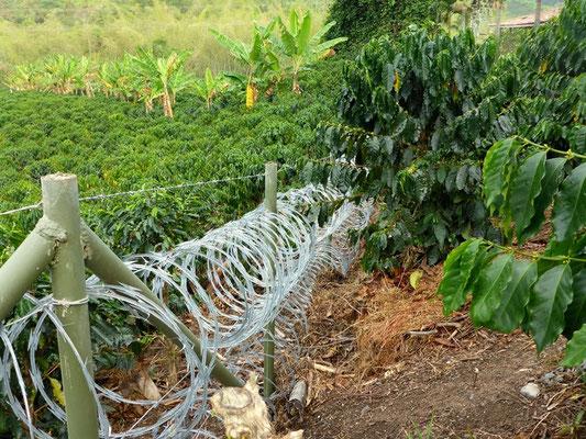 Wie alles in Kolumbien, so ist auch die Kaffeeplantage gut geschützt