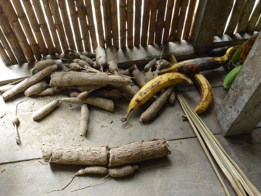 Grundnahrungsmittel Maniok (Yuka) und Kochbanane