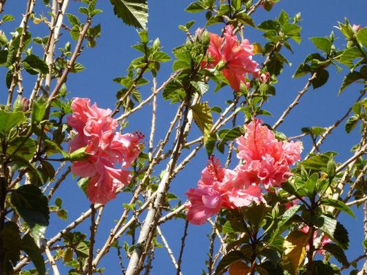 Diese Blumen sagen schon viel über das super Klima aus!